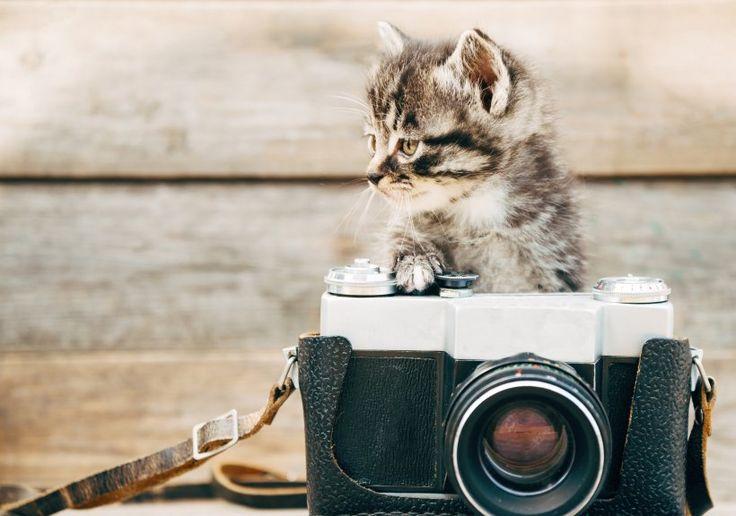 Foto-Wettbewerb: Die süßesten Katzenbabys - Wir haben gesucht und sie gefunden…