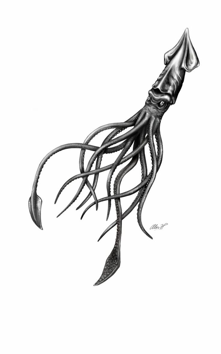 Black And Grey Squid Tattoo Design by Alexhp25