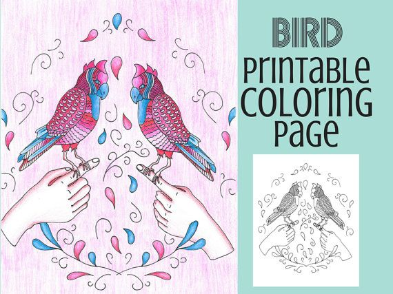 Coloring Pages Bird Book Adult Printable Page