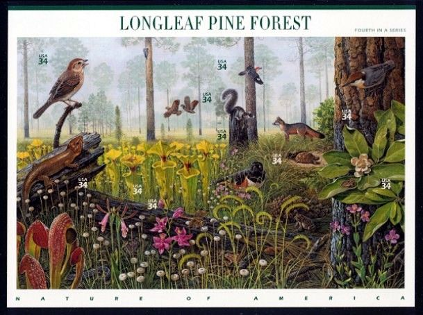 longleaf dating site Page content save the date for our 10th annual longleaf festival: saturday,  may 18, 2019 10 am–2 pm harris lake county park (2112.