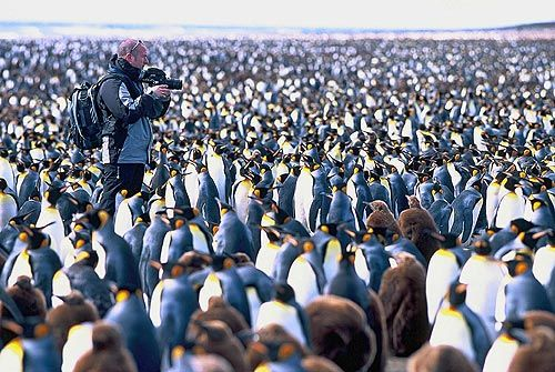 Tourist on a beach on Kerguelen Island, Territory of the French Southern and Antarctic Lands, with an estimated 200,000 King Penguins ~ Photo provided by Olivier Staiger