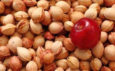 Cuscino noccioli di ciliegia: a cosa serve, funziona, come si fa in casa da soli? Dà sollievo in caso di dolori articolari e mal di schiena e cervicale.
