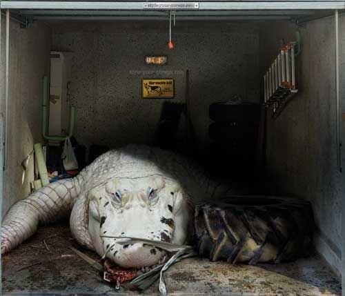 25 best garage door art images on pinterest