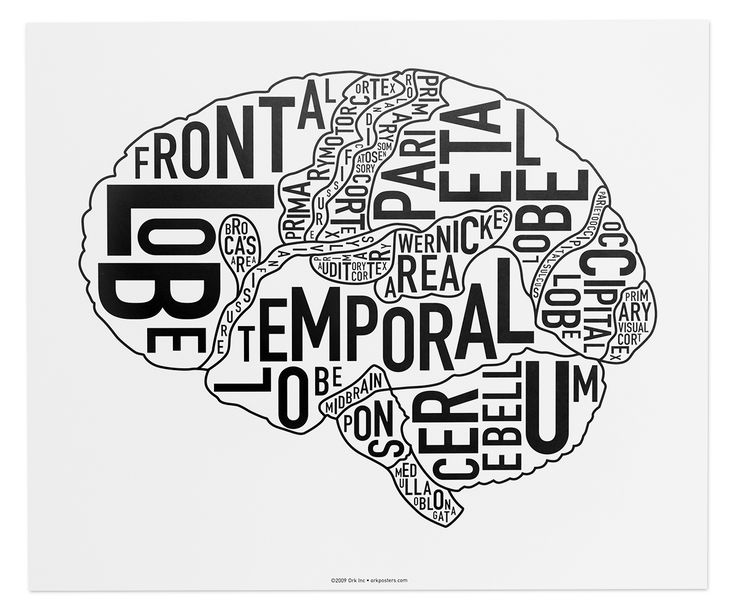 "Science + Art = Good Things. Notice there is not the ""Thinking Cap"" title at the bottom of this version. 15"" x 12.5"" typographic diagram of the sections of the brain. The letters of the name of each area are twisted and turned to fit inside the area. Because we care about impressing you, Ork Posters uses only the highest quality of print methods. This poster is offset printed which offers a sharp and clean print, saturated colors, and archival properties to be sure th..."