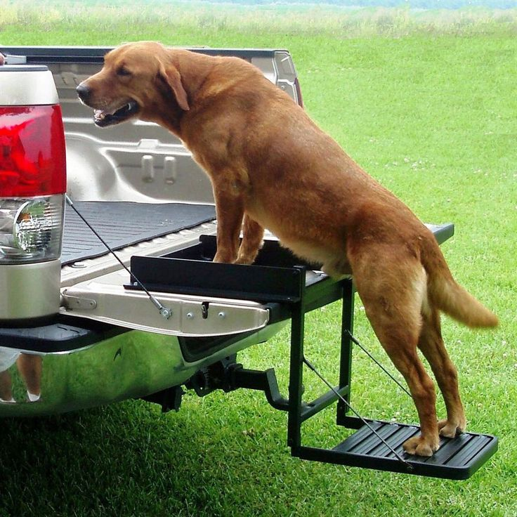 Pets get into truck beds easier with this all-purpose tailgate step