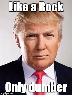 Donald Trump | Like a Rock Only dumber | image tagged in donald trump | made w/ Imgflip meme maker