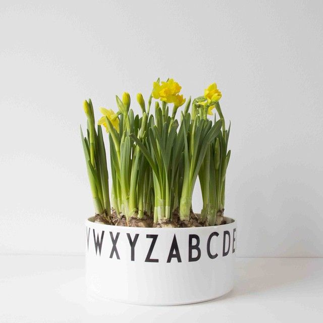 Ready for Easter? Create a graphic centrepiece with Design Letters decoration bowl and daffodils. Typography: Arne Jacobsen. Design Letters & Friends.