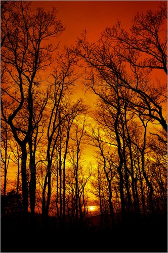 Flaming sunset sky above a forest