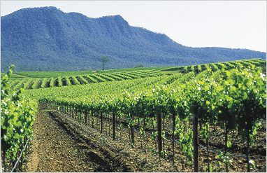 Wine tasting in the Hunter Valley, Australia