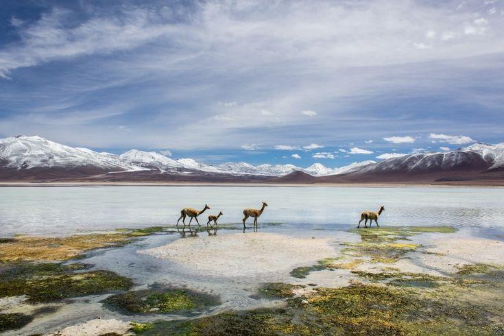 Eine Jeep Tour zum Salar de Uyuni, dem größten Salzsee der Welt, sollte man sich in Bolivien nicht entgehen lassen. Vorbei an Lagunen voller Flamingos,...