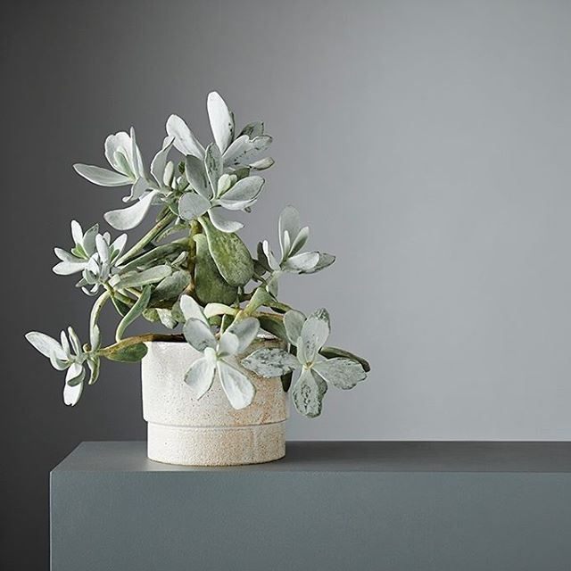 Gushing over these pretty white speckled planters new in store by Anchor Ceramics. Love the simple shape and the gorgeous glazing - can you imagine this among your Christmas decor?
