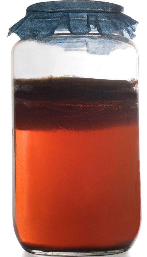 Learn how to easily make Kombucha with the most definitive brewing guide on the web, from start to finish