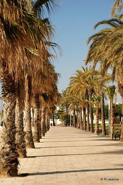 Cambrils, el Paseo Marítimo bordeado de palmeras #CostaDorada #Catalunya