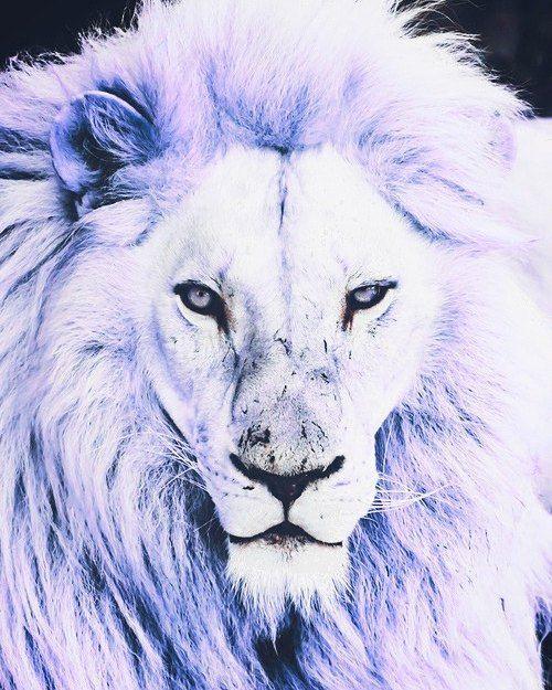 provocative-planet-pics-please.tumblr.com Pretty lion # ...