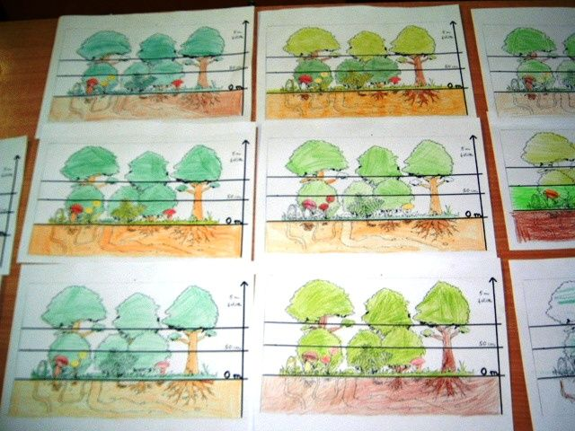 Játékos tanulás és kreativitás: Az erdő szintjei: flipbook és játék