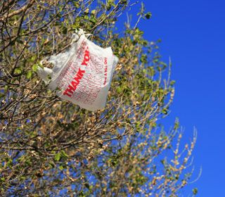 Are Certified Reusable Bags Better for the Environment Than Plastic Bags?