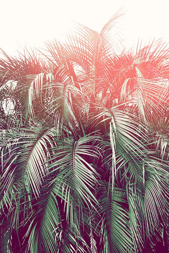 Unique PALM TREE Photography Palm Tree Frond by PhotographyByAnita