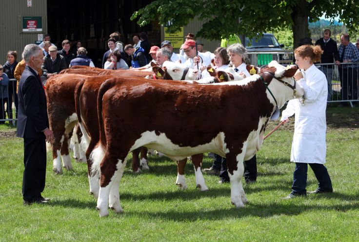Image Courtesy of the Royal Three Counties Show Blog Post : #Herefordbeef and the classic British Agricultural Show.