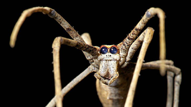 Quiz How Much Do You Know About Invertebrates Invertebrates Bugs And Insects Spider