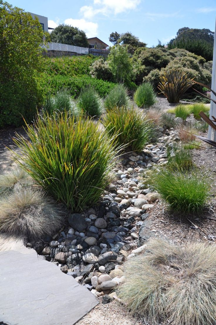 96 best images about modern landscaping on pinterest for Modern ornamental grasses