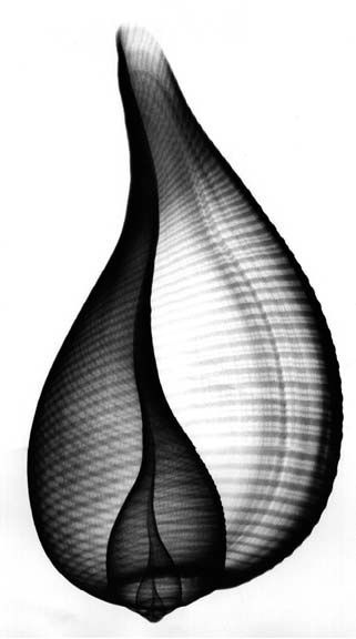 X ray shell X-Ray art by Nick Veasey RADIOGRAPHX-RAY PHOTOGRAPHY / X-RAY ART More At FOSTERGINGER @ Pinterest