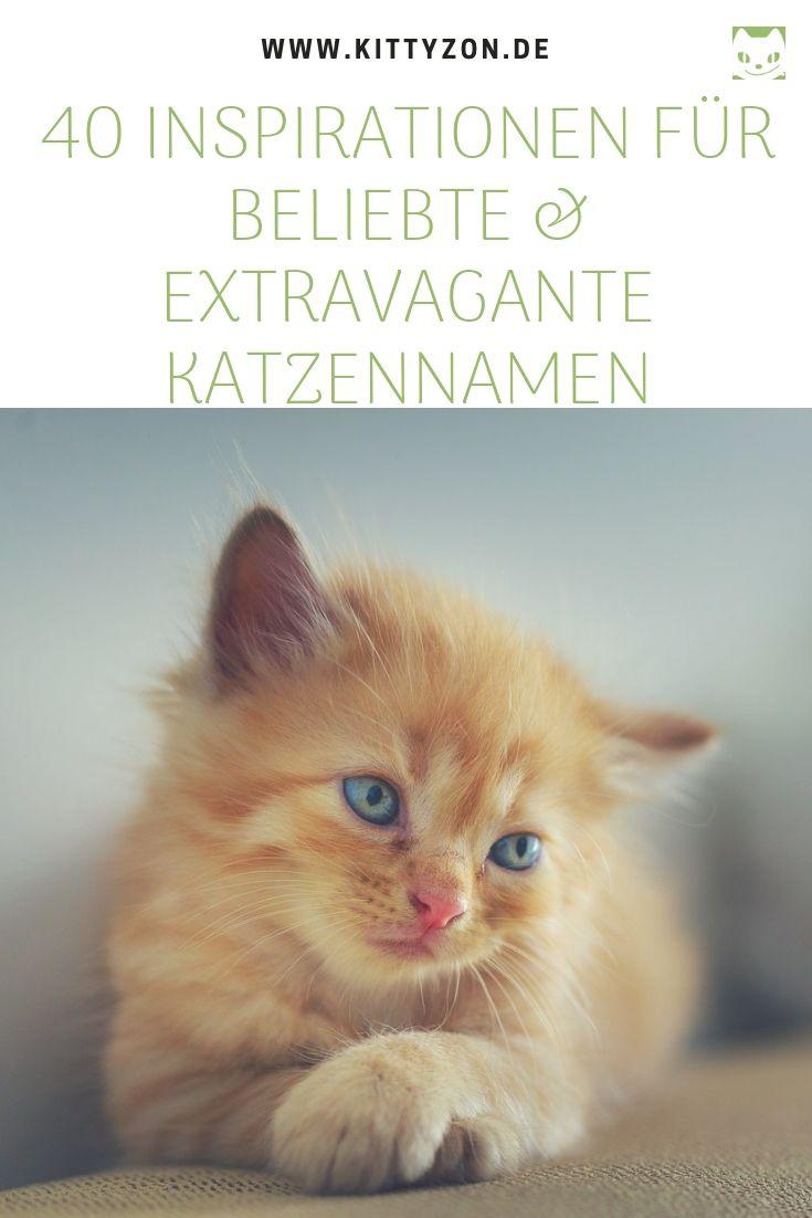 40 Beliebte Aussergewohnliche Katzennamen Tipps Zur Auswahl
