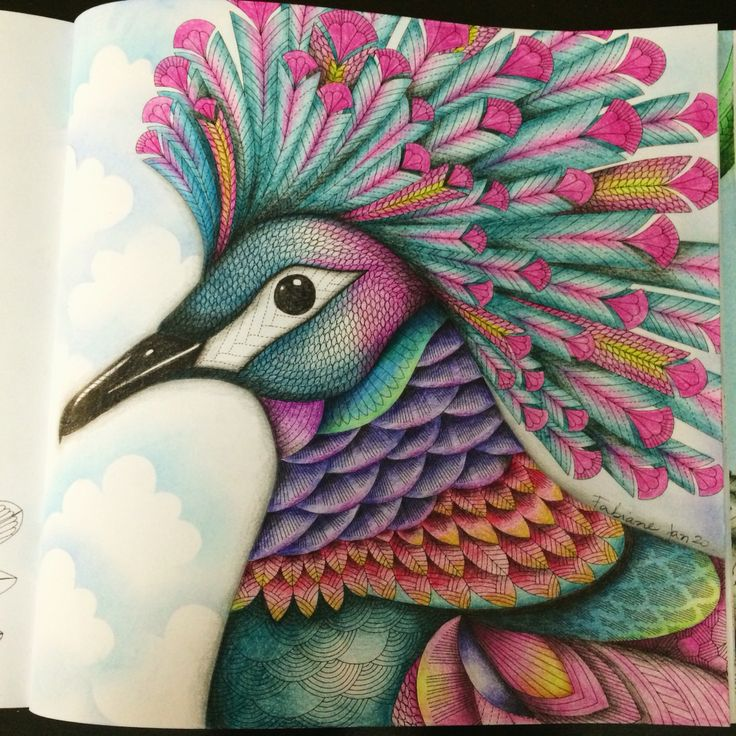 My Colors By Millie Marotta Book