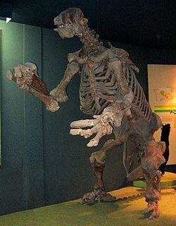 Eremotherium | Giant Ground Sloth | Eremotherium.jpg