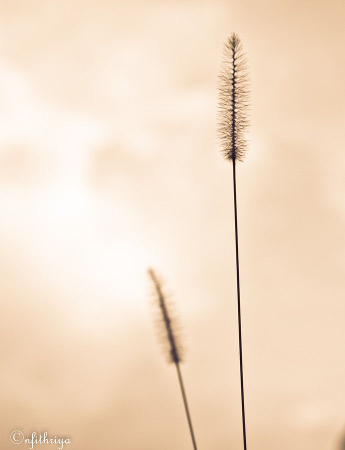 grass flower by Noor Fithriya on 500px
