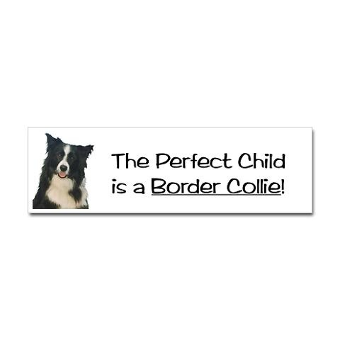 They don't talk back. And are smarter than your toddler. :) #fact #bordercollie