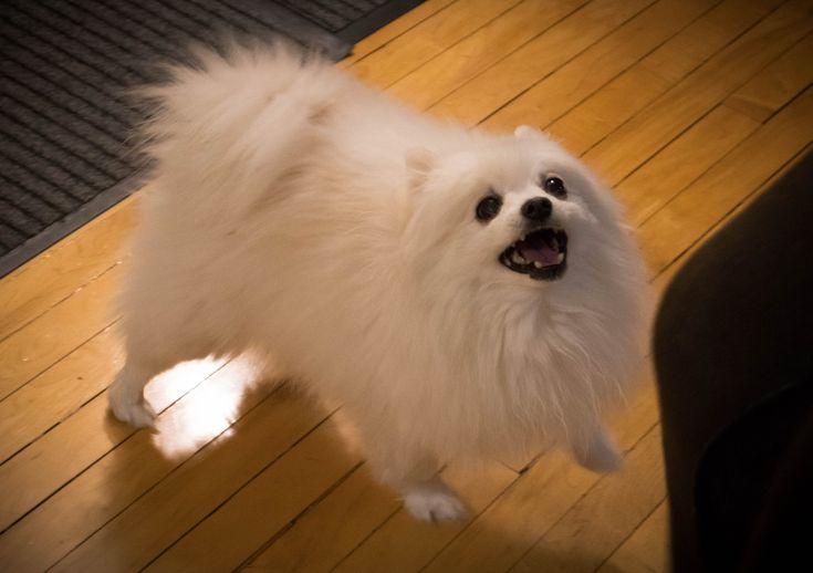 Gabe the Dog [2011-2017] http://ift.tt/2iLdwtu