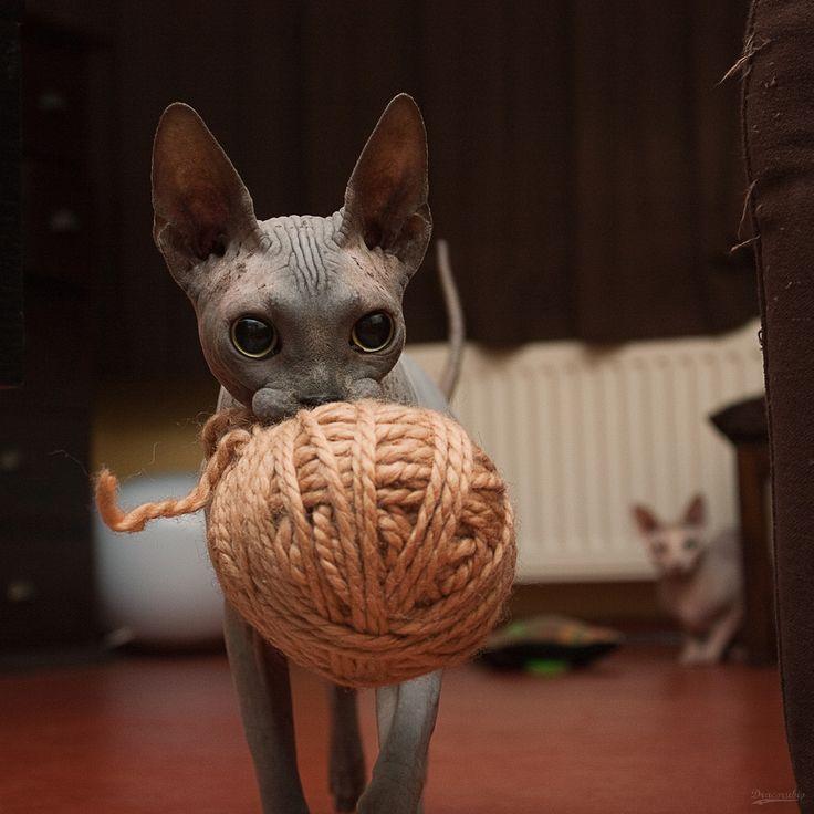 It's all a ball a yarn