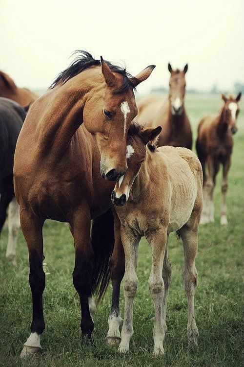 Sweet affection between mare and foal.