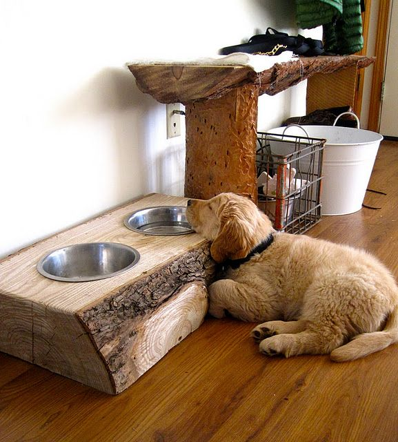 Homemade dog feeder, made from a slab of oak.  Sliced from the log with a chainsaw, then the holes for the dog bowls were chiseled out by hand and the bowls set inside (and, that's my puppy).