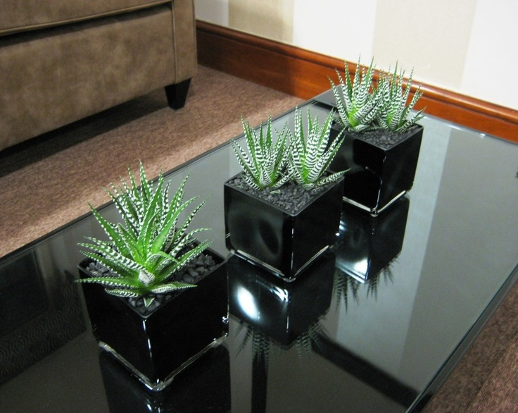 Coloured glass works small scale too - Table arrangement of small Haworthia Fasciata succulents.