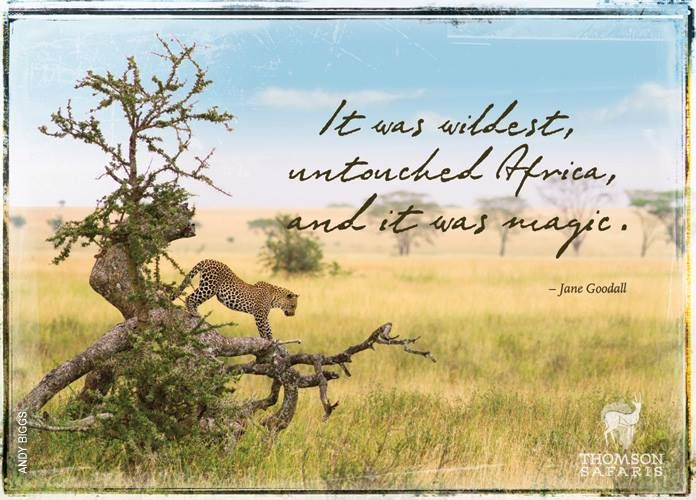 Beautiful photo & #quote about #Africa.  Thanks @Thomson Safaris!