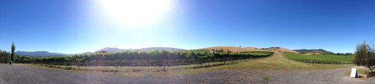 A panoramic view of the vineyard at Soumah Wines, 18 Hexham Rd, Gruyere.