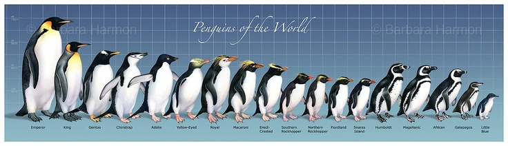 Emperor penguin size comparison - photo#1