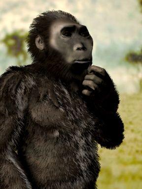 21. Kenyanthropus. Es una especie de homínido que posee distintas características a los anteriores: posee rasgos faciales planos y delicados, se puede definir como un nuevo género ya que su cerebro es parecido al homo rudolfensis.