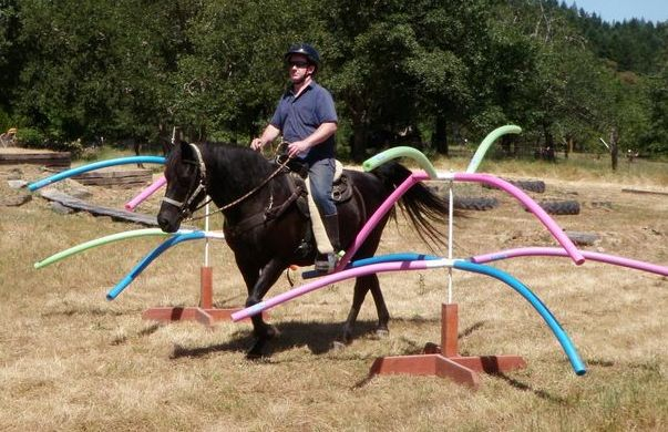 6 Pool Noodle Obstacles « HORSE NATION