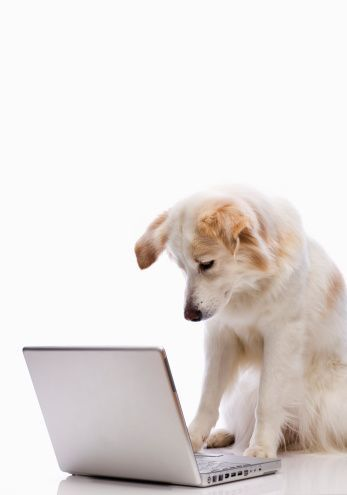 A Guide to Online Pet Stores: Tips You'll Want to Know