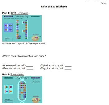 This comprehensive laboratory lesson plan includes everything you need to teach an engaging inquiry lesson on DNA! Included in this product: 1. Teacher supply lists to extract DNA from peas. All materials can be bought from a grocery store. 2. Teacher lab directions 3.
