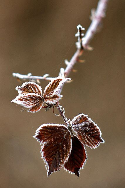 Winter autumn fall brown leaf