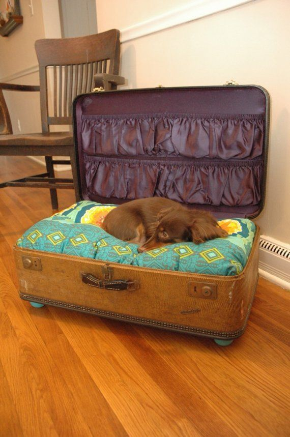 Old suitcase made into a dog bed, complete with dachshund puppy!