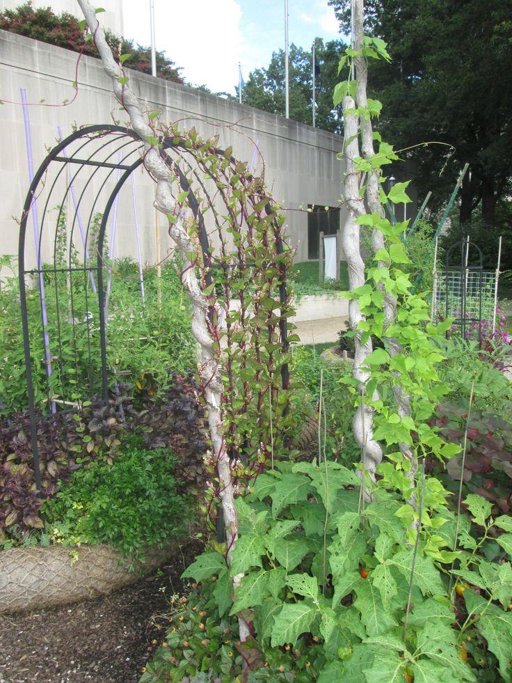 Bill's visit to the Smithsonian Victory Garden | Fine Gardening