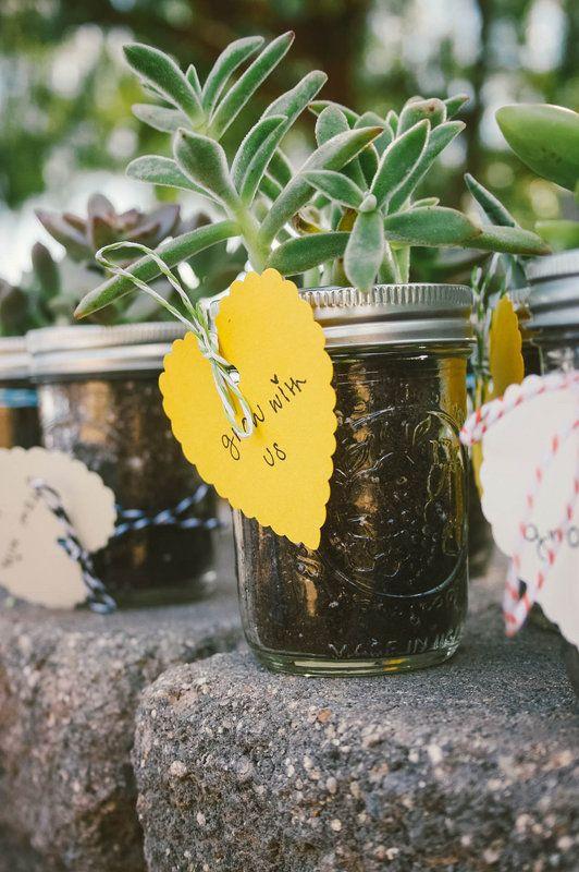 Succulent wedding favors, we could use tiny Mason jars
