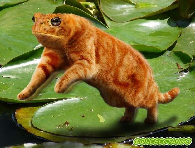 Frat. | 28 Unsettling Animal Mashups That Should Probably Never Have Happened