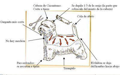 Peluqueria Canina y Cuidados de la Mascota: Westy Corte y Mantenimiento