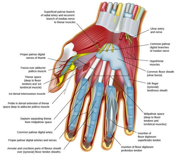 People who use their hands a lot in their work or play often find that massage to the hand can be very beneficial and pleasant too