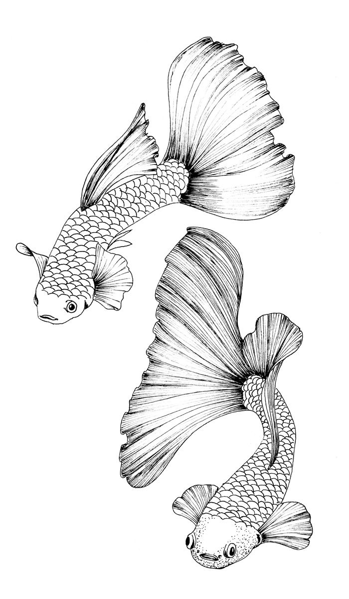 Coloring Page Guppy Fish Etsy Koi Fish Drawing Fish Drawings Koi Fish Colors